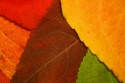 autumn leaf mosaic